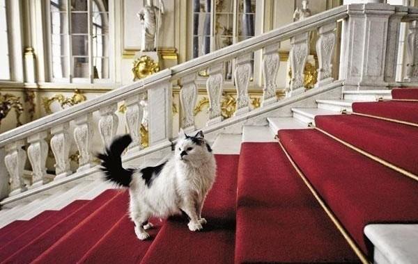 Chat dans les escaliers de l'ermitage qui surveille le musée